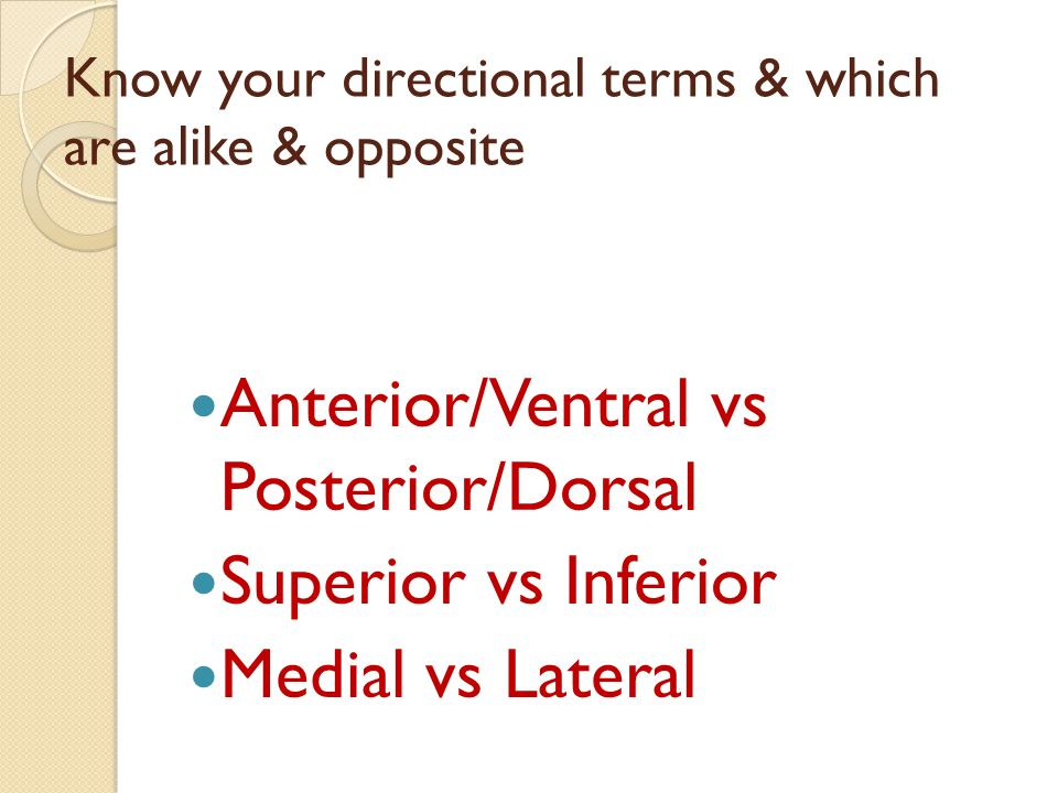 Know your directional terms & which are alike & opposite