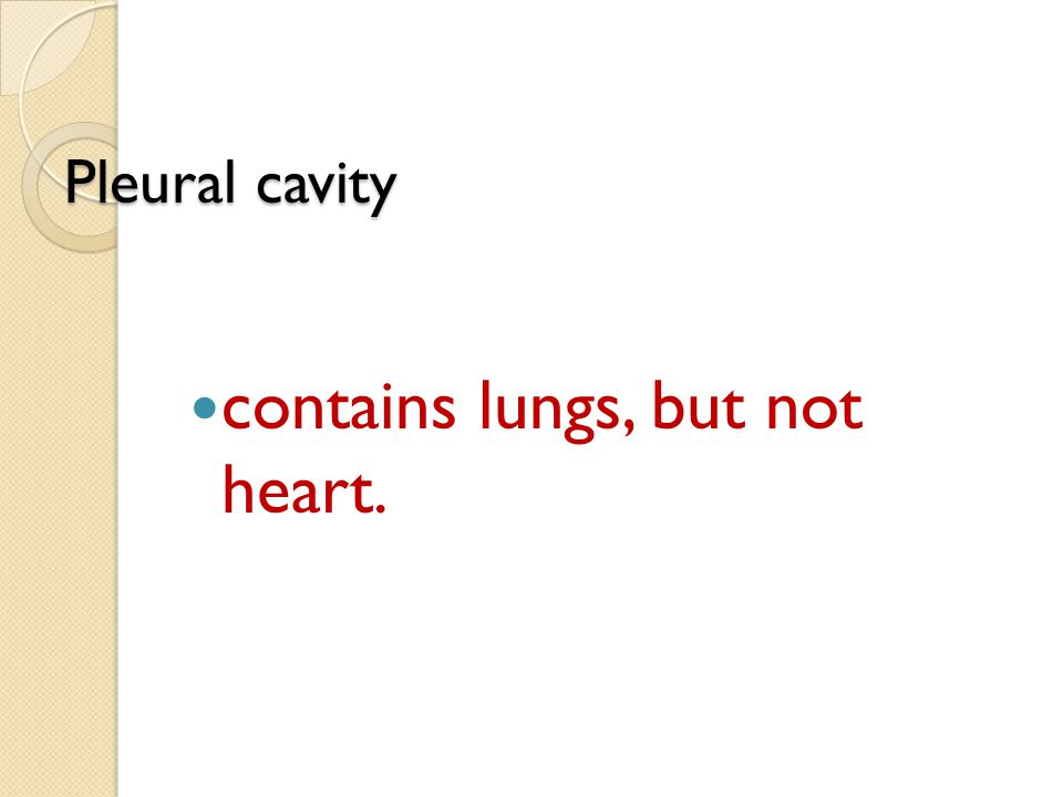 contains lungs, but not heart.