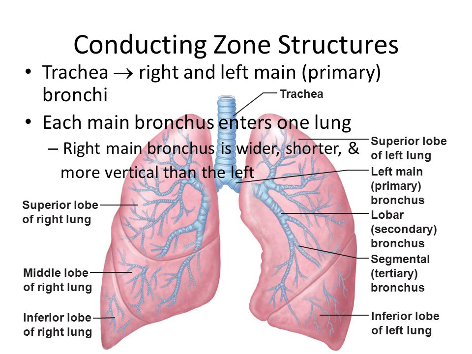 Conducting Zone Structures
