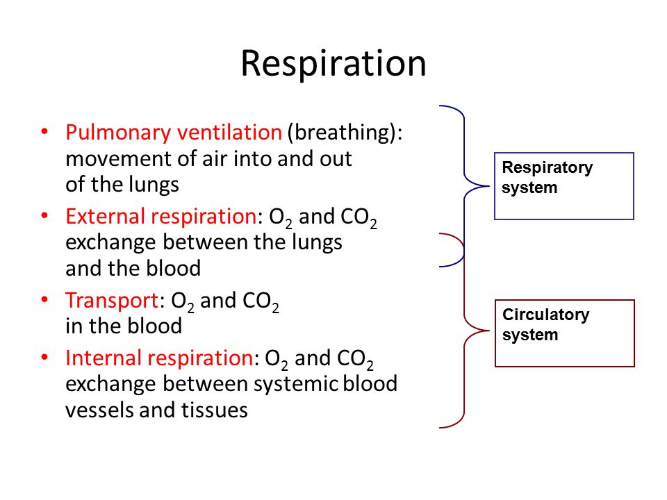 Respiration Pulmonary ventilation (breathing): movement of air into and out of the lungs.