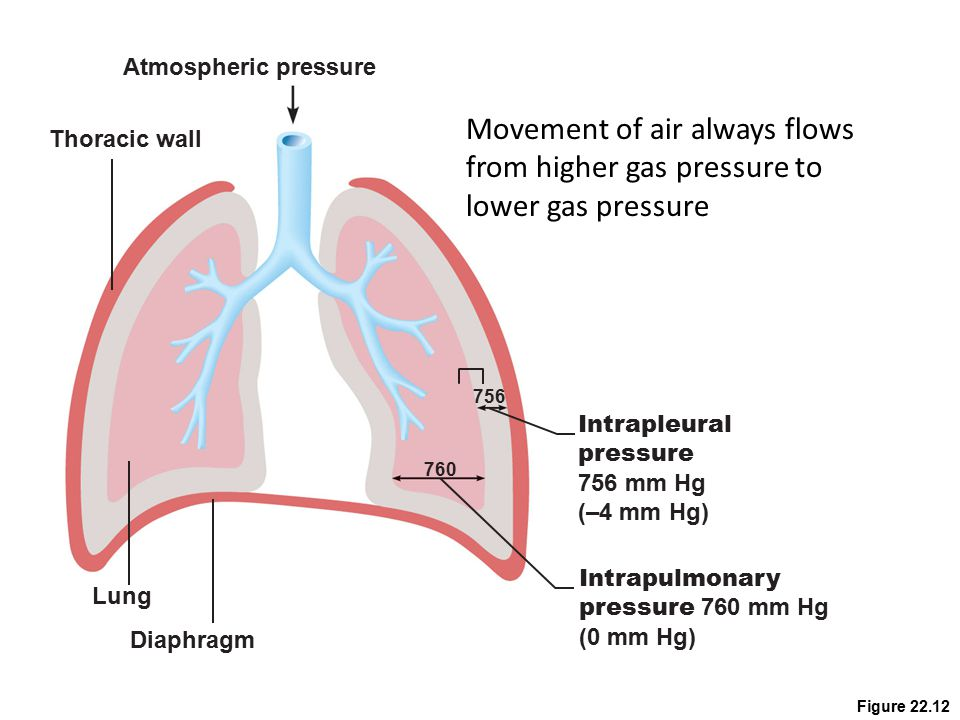 Atmospheric pressure Movement of air always flows from higher gas pressure to lower gas pressure. Thoracic wall.