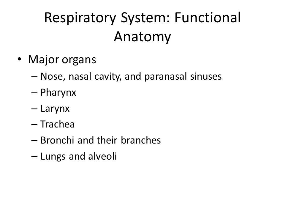 Respiratory System: Functional Anatomy