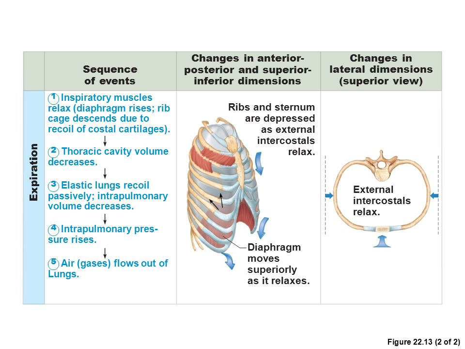 posterior and superior-