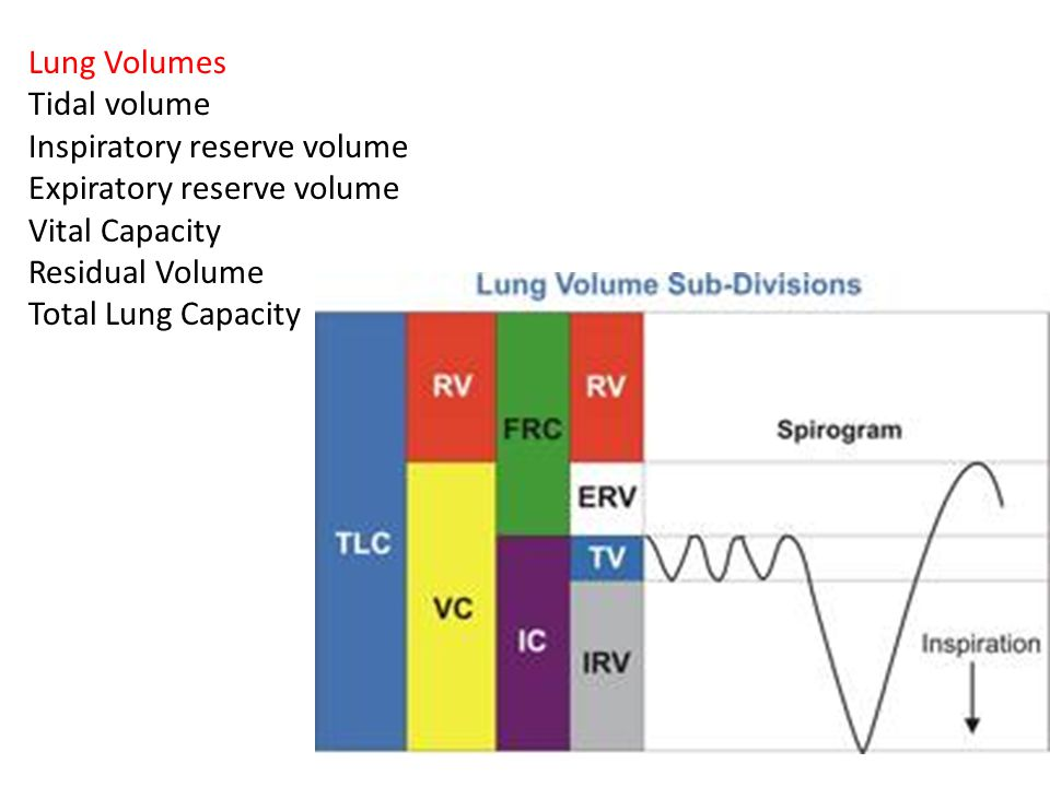 Lung Volumes Tidal volume. Inspiratory reserve volume. Expiratory reserve volume. Vital Capacity.