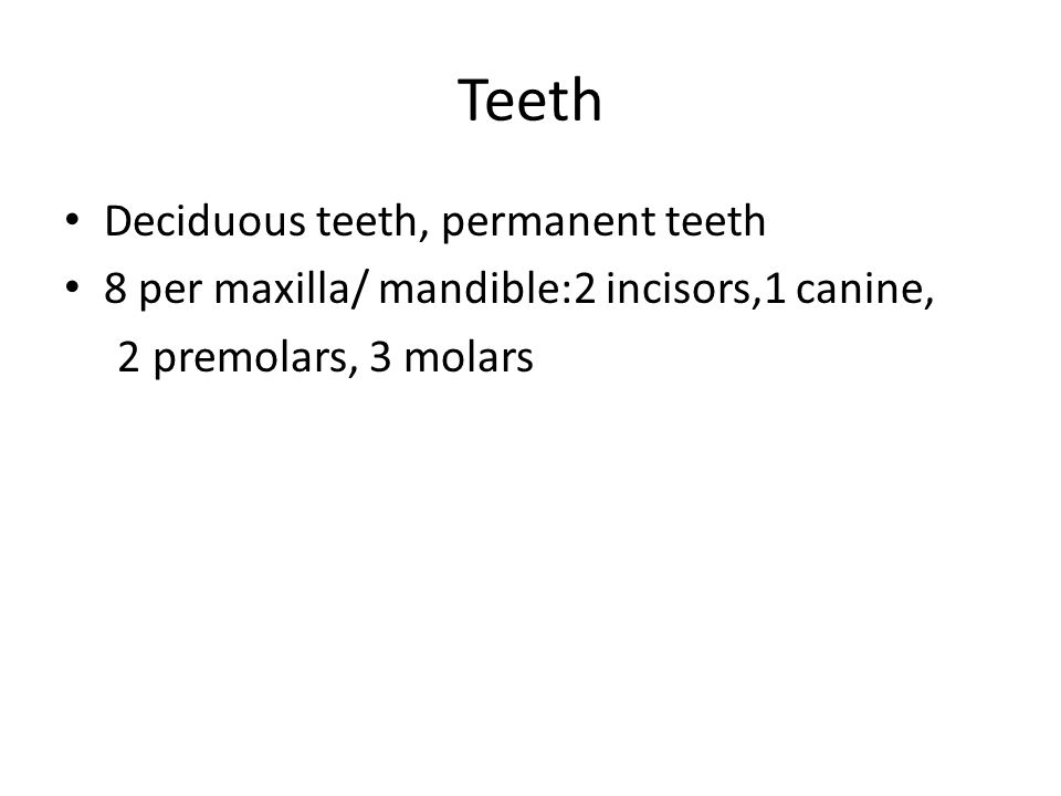 Teeth Deciduous teeth, permanent teeth