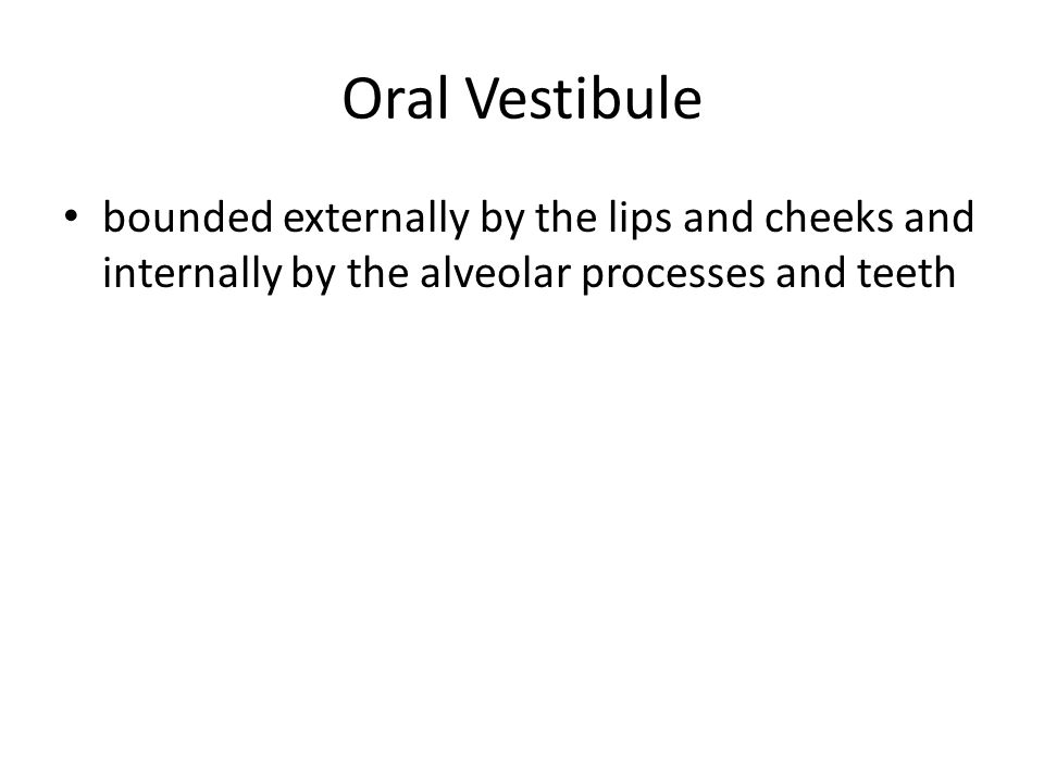 Oral Vestibule bounded externally by the lips and cheeks and internally by the alveolar processes and teeth.
