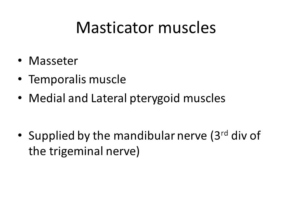 Masticator muscles Masseter Temporalis muscle