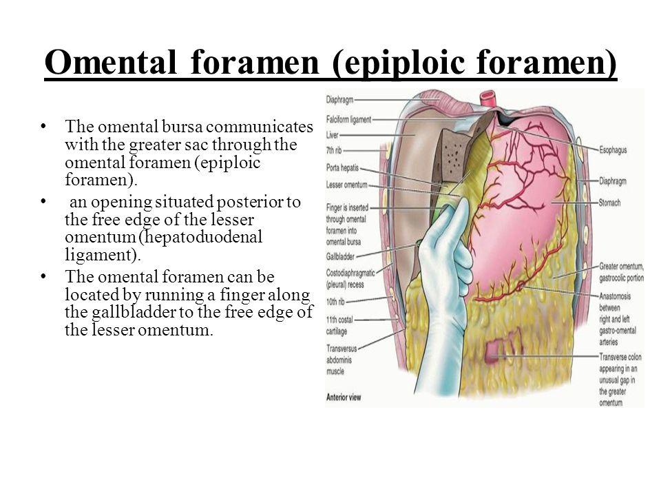 Omental foramen (epiploic foramen)
