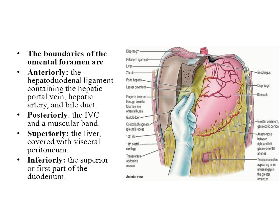 The boundaries of the omental foramen are