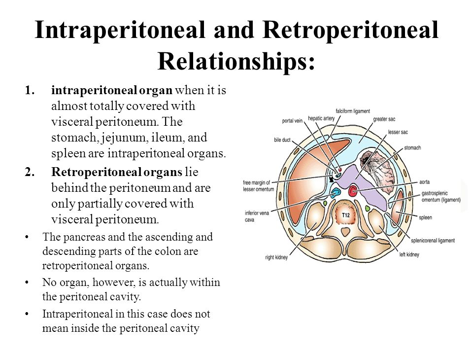 Intraperitoneal and Retroperitoneal Relationships:
