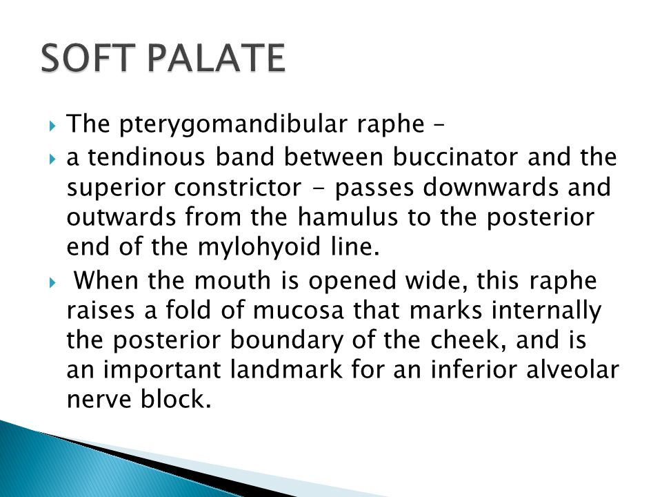 SOFT PALATE The pterygomandibular raphe –