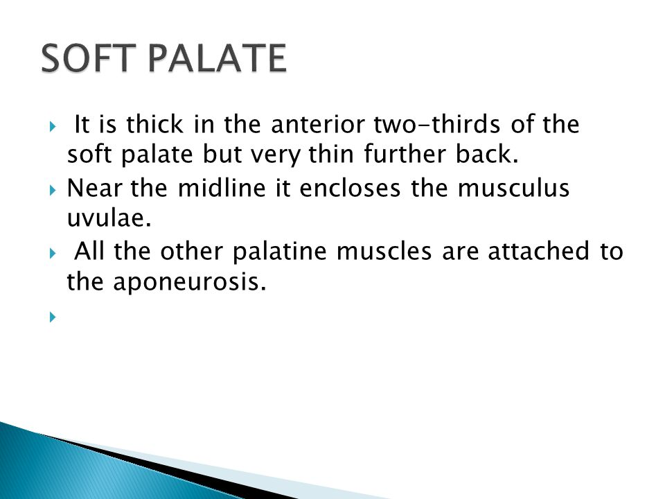 SOFT PALATE It is thick in the anterior two-thirds of the soft palate but very thin further back.
