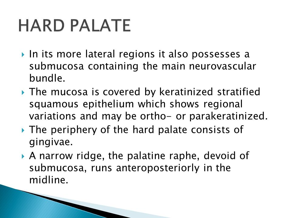 HARD PALATE In its more lateral regions it also possesses a submucosa containing the main neurovascular bundle.
