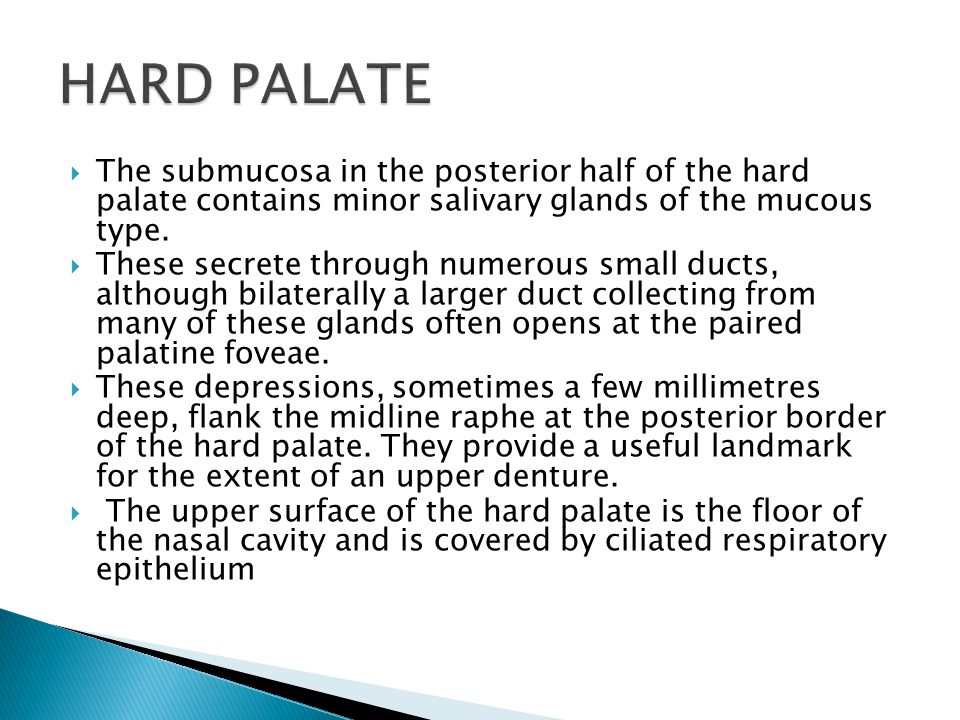 HARD PALATE The submucosa in the posterior half of the hard palate contains minor salivary glands of the mucous type.