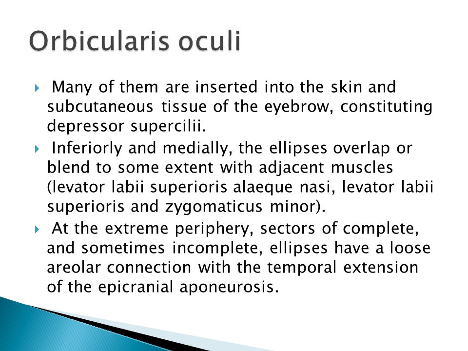 Orbicularis oculi Many of them are inserted into the skin and subcutaneous tissue of the eyebrow, constituting depressor supercilii.