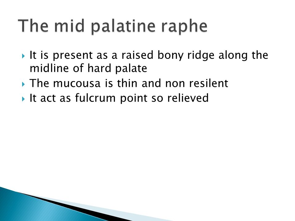 The mid palatine raphe It is present as a raised bony ridge along the midline of hard palate. The mucousa is thin and non resilent.