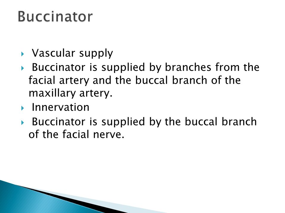 Buccinator Vascular supply