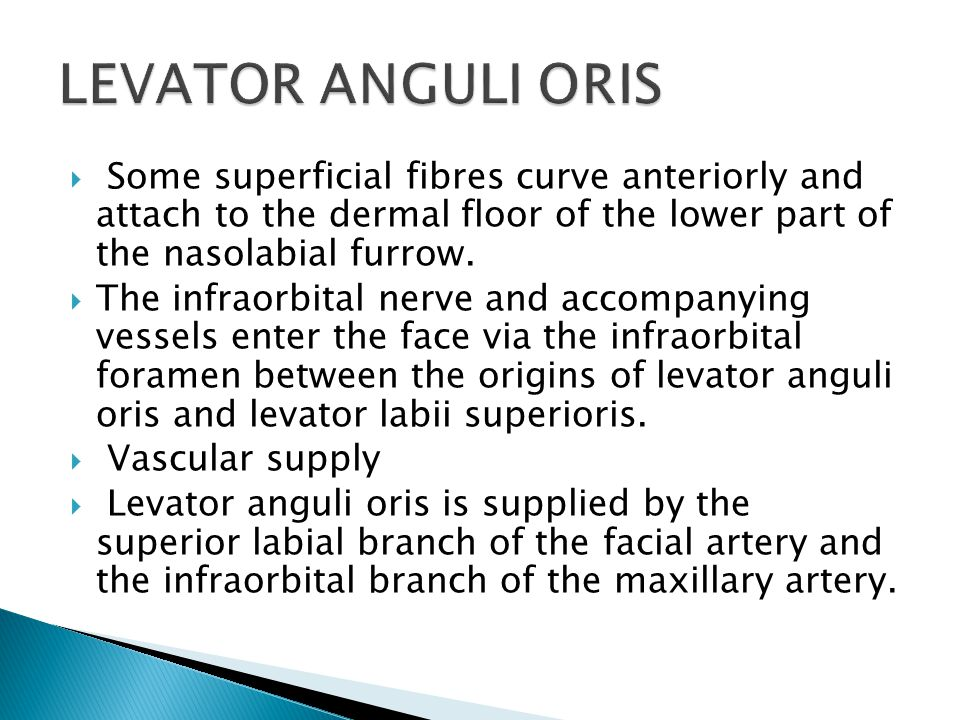 LEVATOR ANGULI ORIS Some superficial fibres curve anteriorly and attach to the dermal floor of the lower part of the nasolabial furrow.