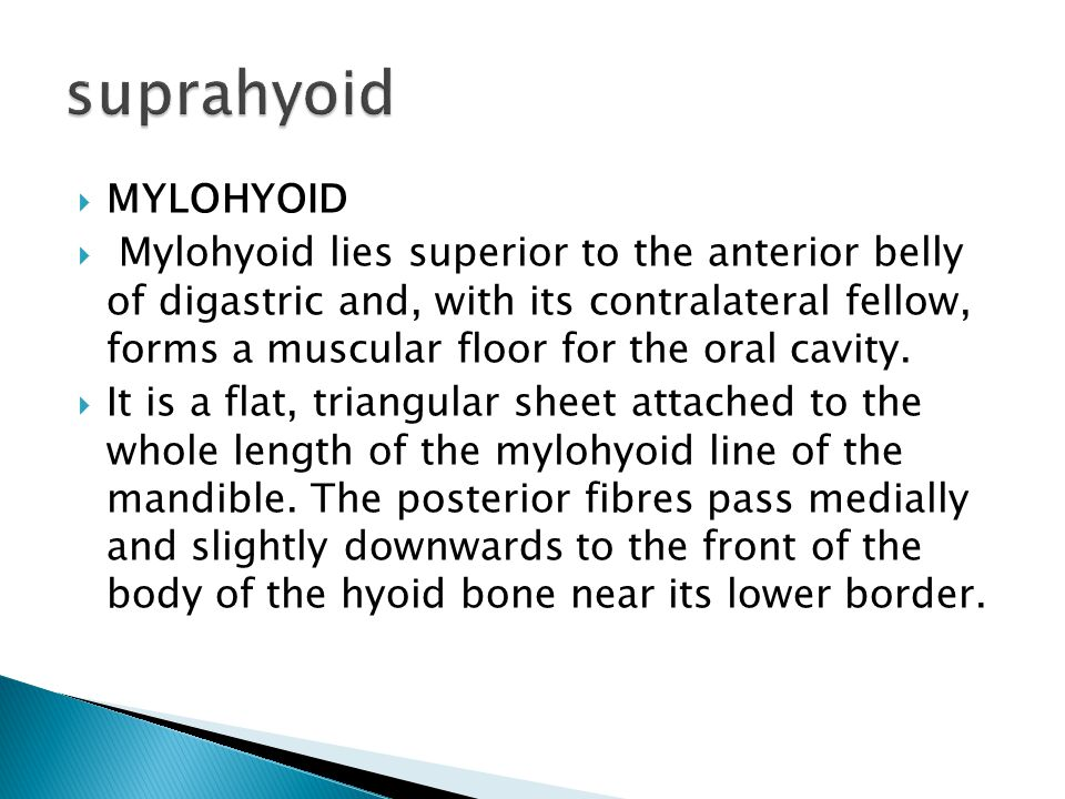 suprahyoid MYLOHYOID.