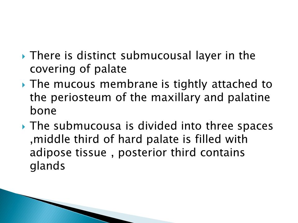 There is distinct submucousal layer in the covering of palate