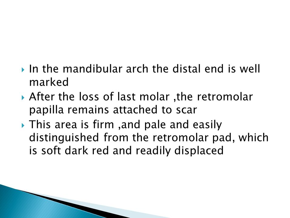 In the mandibular arch the distal end is well marked