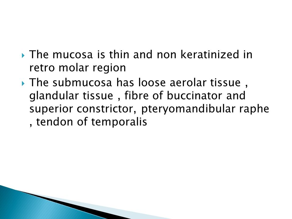 The mucosa is thin and non keratinized in retro molar region