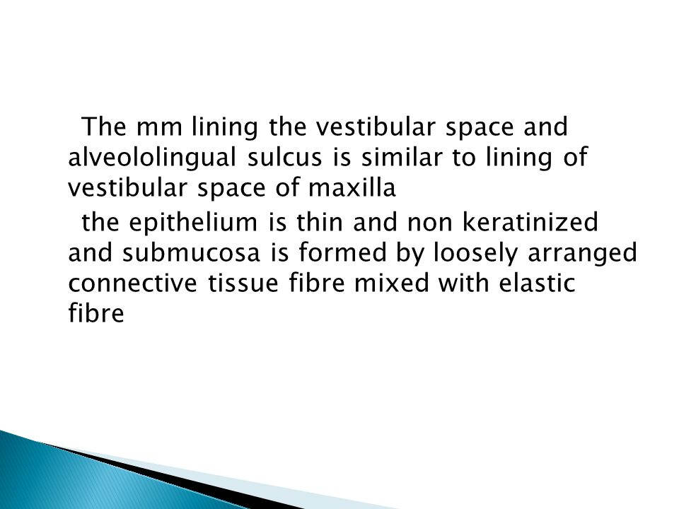 The mm lining the vestibular space and alveololingual sulcus is similar to lining of vestibular space of maxilla the epithelium is thin and non keratinized and submucosa is formed by loosely arranged connective tissue fibre mixed with elastic fibre