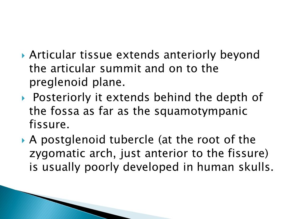 Articular tissue extends anteriorly beyond the articular summit and on to the preglenoid plane.