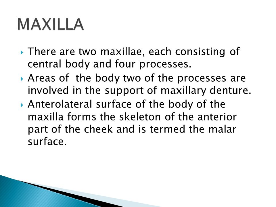 MAXILLA There are two maxillae, each consisting of central body and four processes.