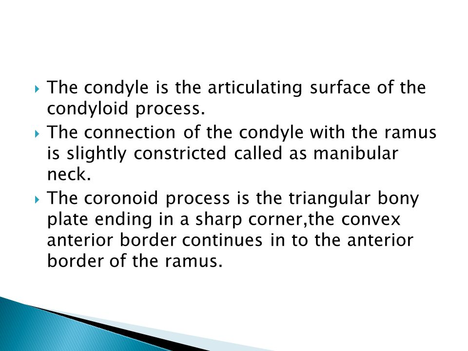 The condyle is the articulating surface of the condyloid process.