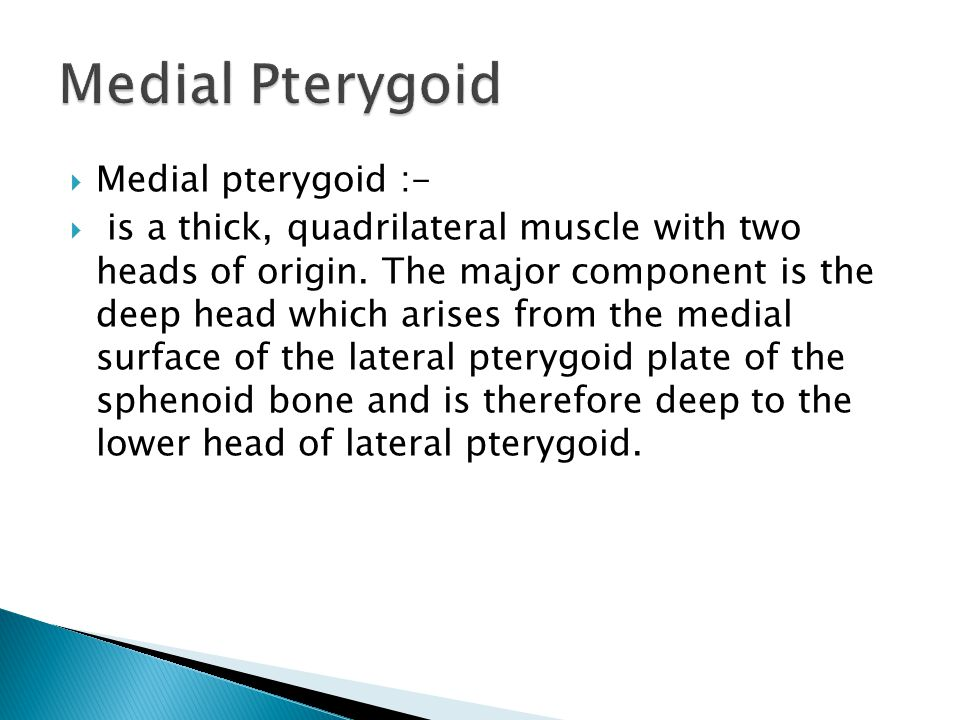 Medial Pterygoid Medial pterygoid :-