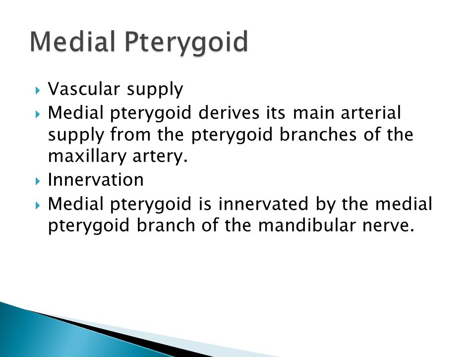 Medial Pterygoid Vascular supply