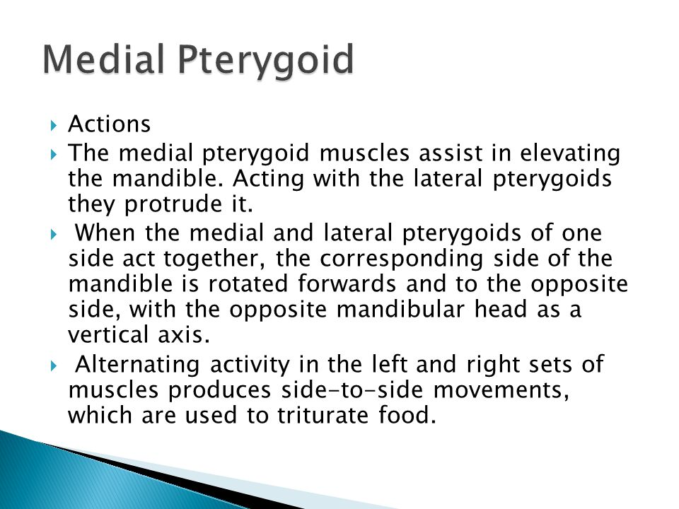 Medial Pterygoid Actions