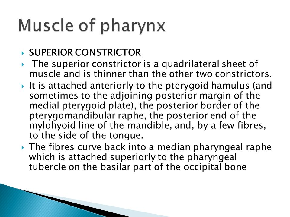 Muscle of pharynx SUPERIOR CONSTRICTOR