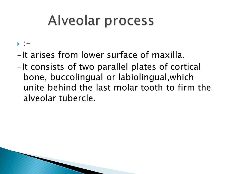 Alveolar process :- -It arises from lower surface of maxilla.