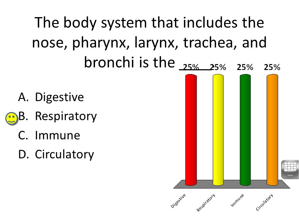 The body system that includes the nose, pharynx, larynx, trachea, and bronchi is the ____.