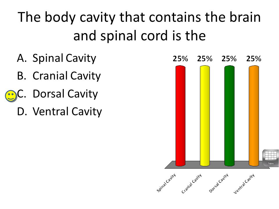 The body cavity that contains the brain and spinal cord is the