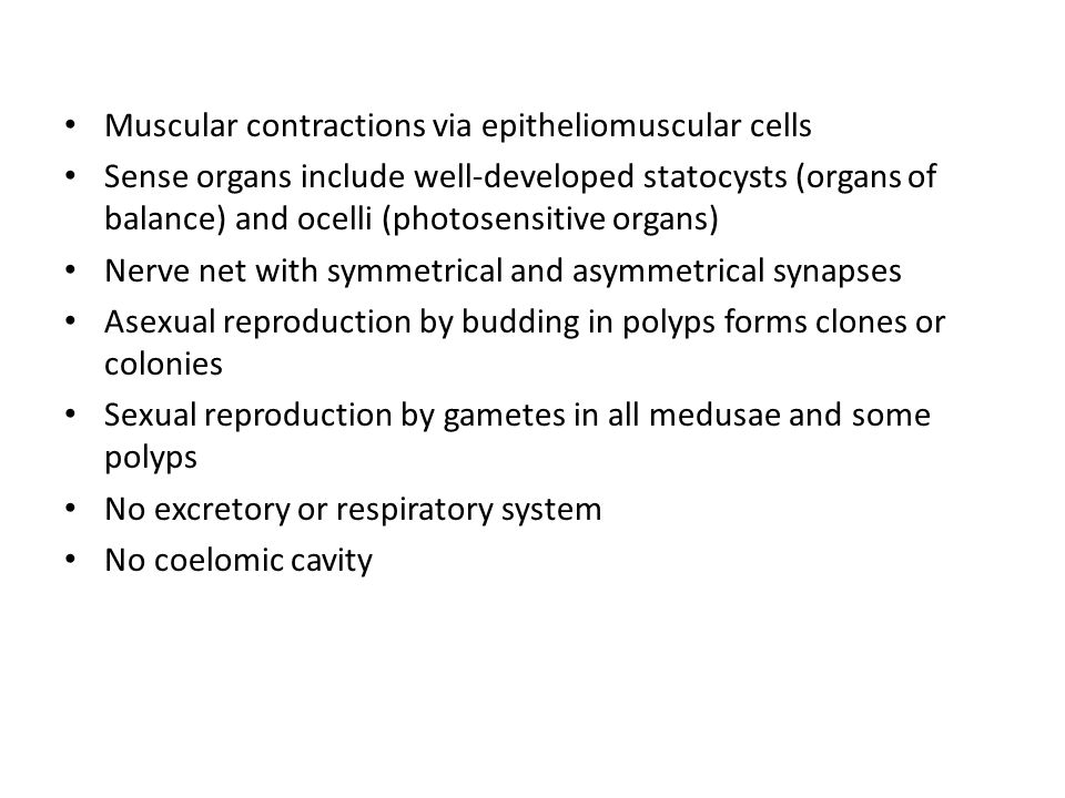 Muscular contractions via epitheliomuscular cells