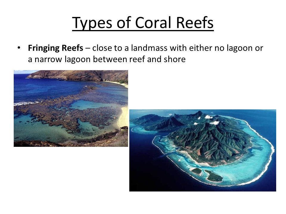 Types of Coral Reefs Fringing Reefs – close to a landmass with either no lagoon or a narrow lagoon between reef and shore.