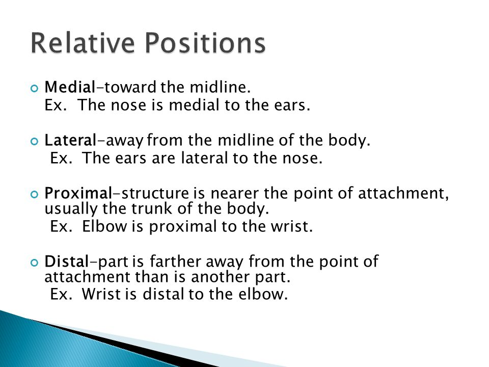 Relative Positions Medial-toward the midline.