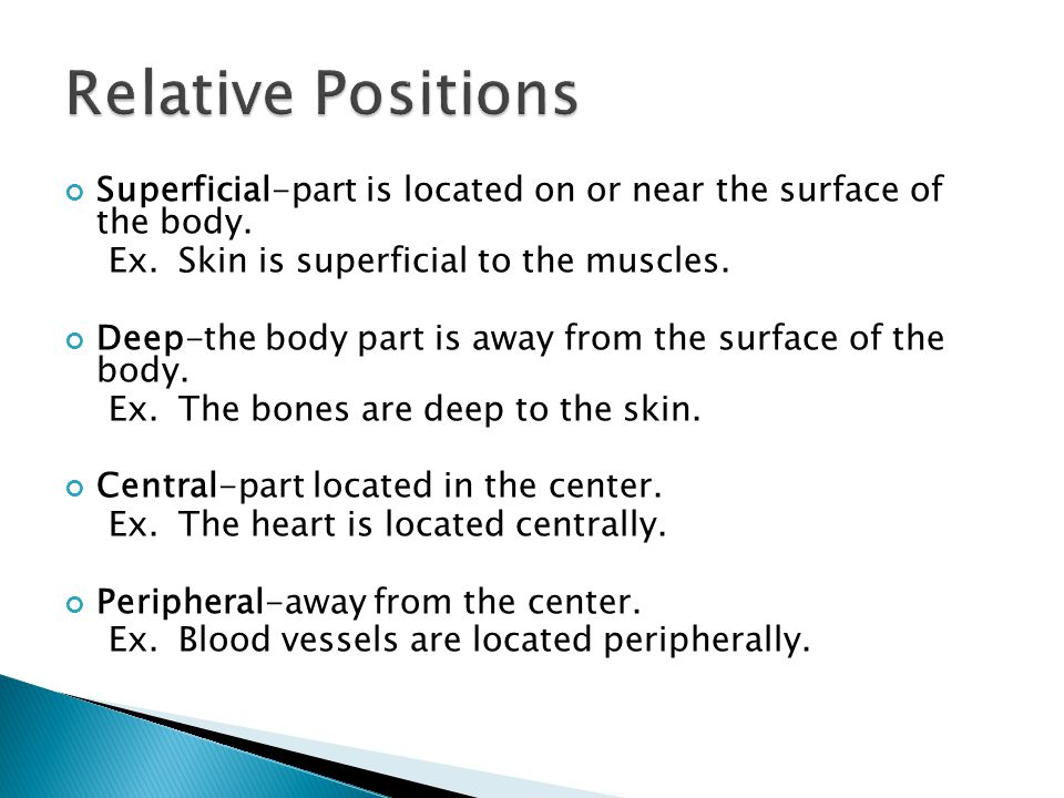 Relative Positions Superficial-part is located on or near the surface of the body. Ex. Skin is superficial to the muscles.