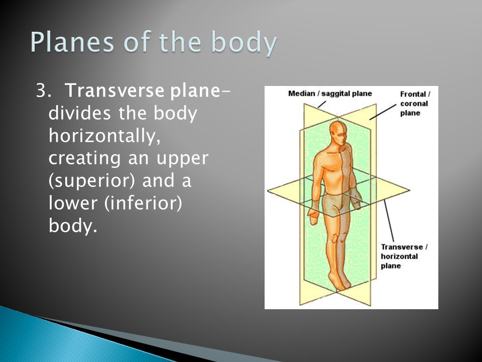 Planes of the body 3.