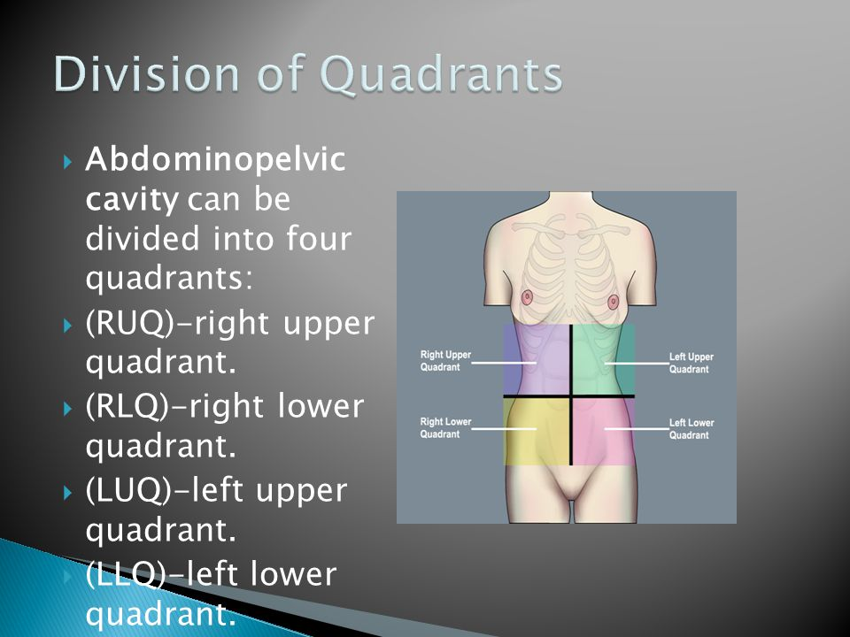 Division of Quadrants Abdominopelvic cavity can be divided into four quadrants: (RUQ)-right upper quadrant.