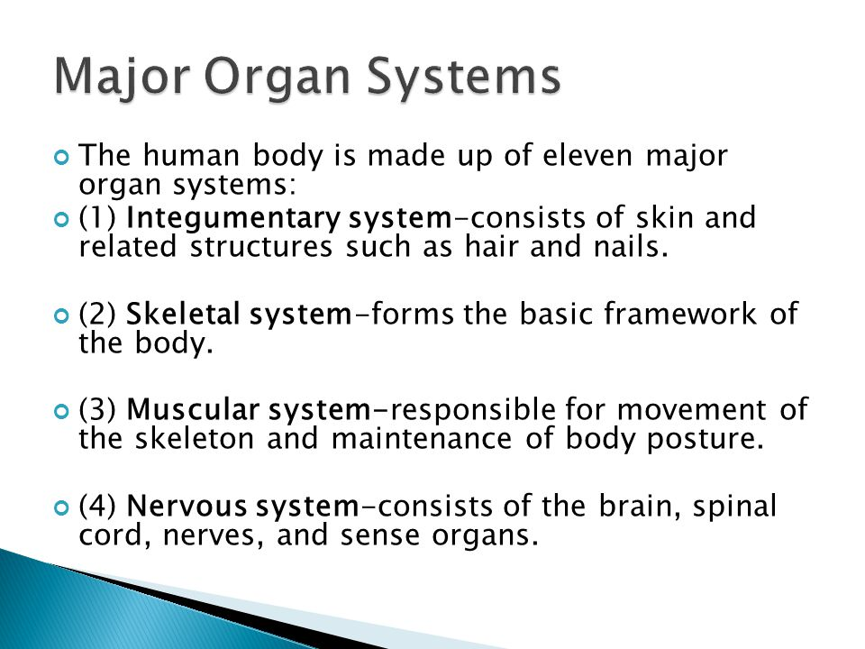 Major Organ Systems The human body is made up of eleven major organ systems: