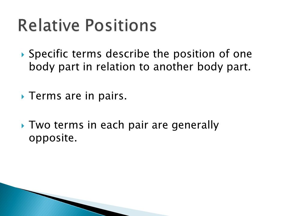 Relative Positions Specific terms describe the position of one body part in relation to another body part.