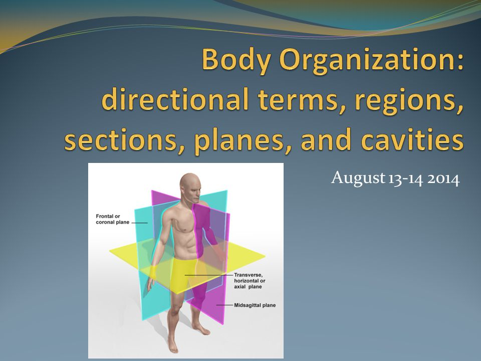 Body Organization: directional terms, regions, sections, planes, and cavities