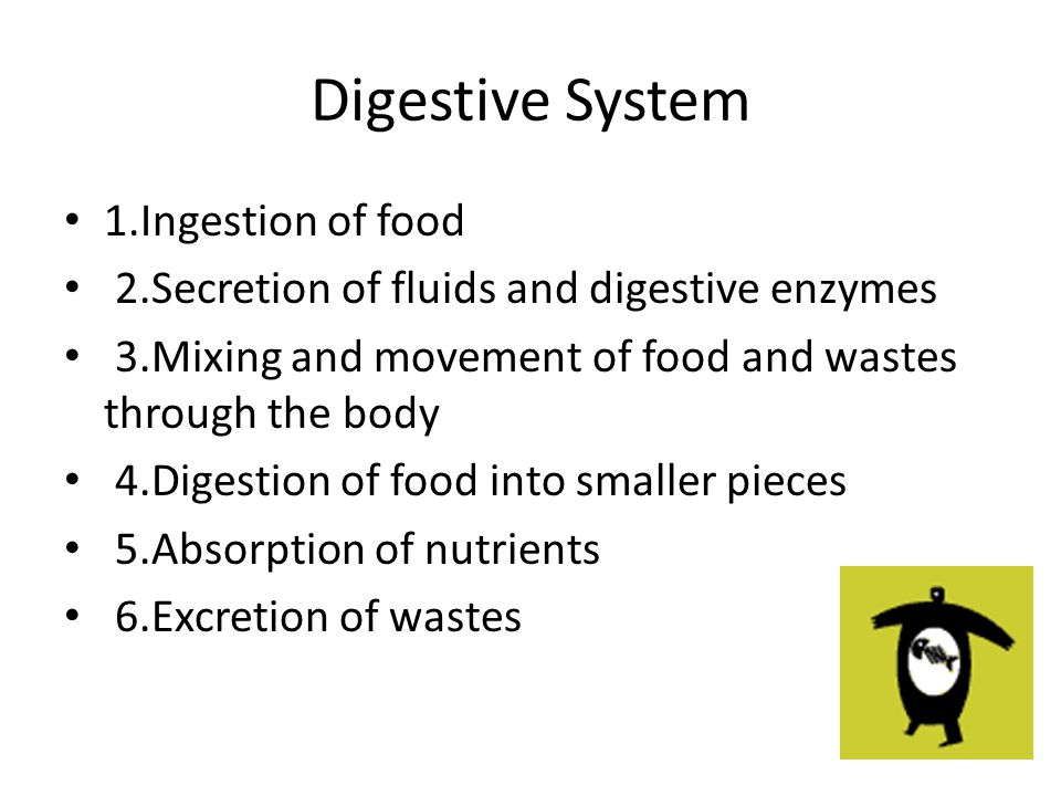Digestive System 1.Ingestion of food