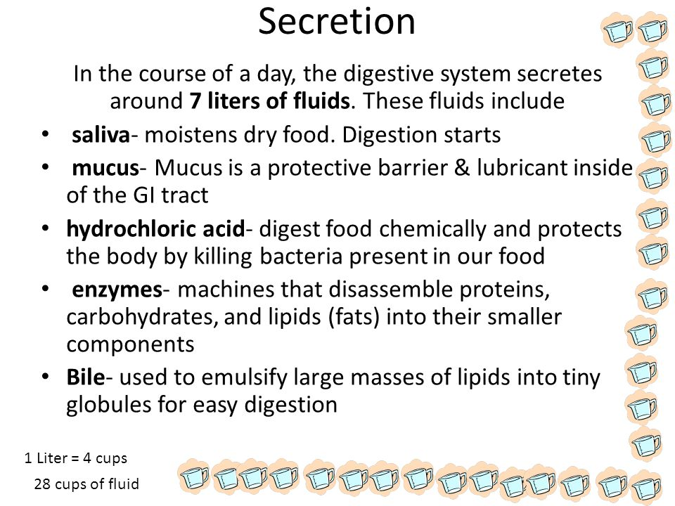 Secretion In the course of a day, the digestive system secretes around 7 liters of fluids. These fluids include.