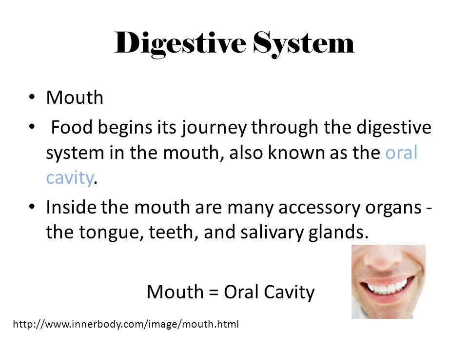 Digestive System Mouth