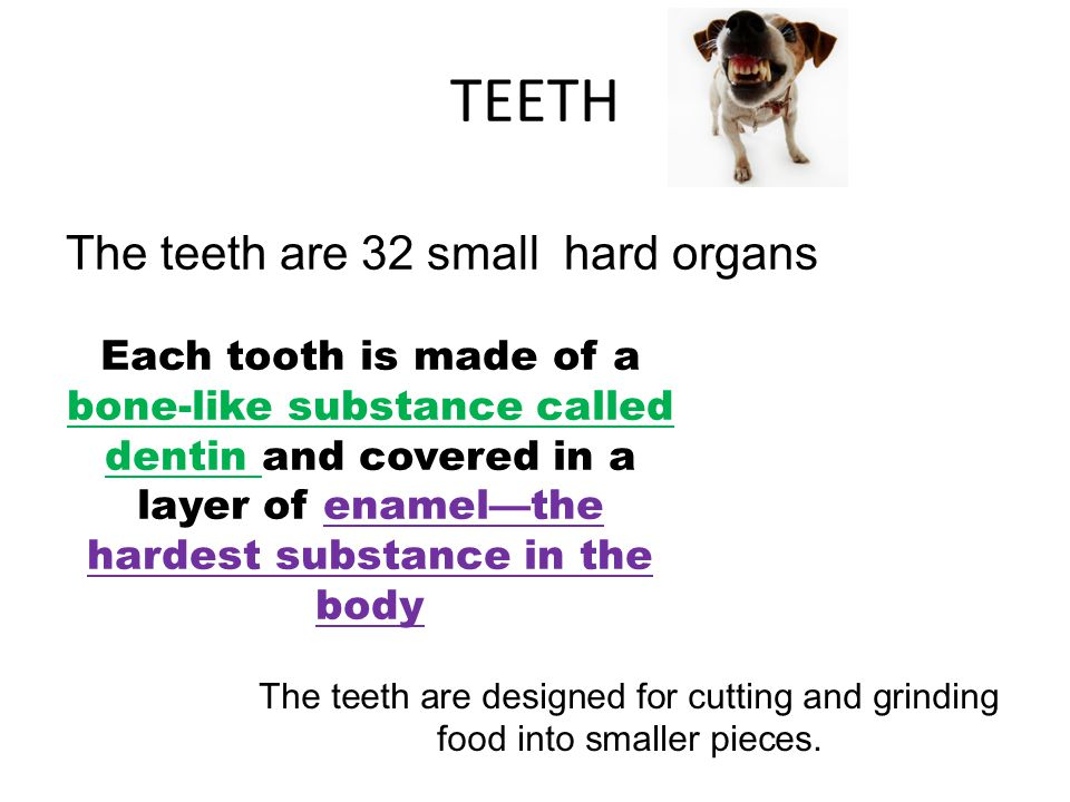 The teeth are 32 small hard organs
